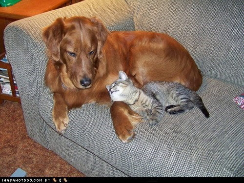 cat couch dogs kittehs r owr friends what breed - 6275950336