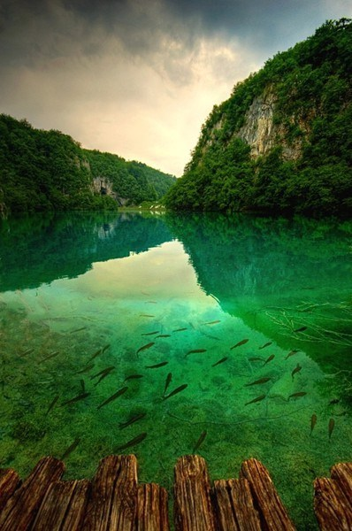 Croatia fish Forest Hall of Fame lake - 6276067584