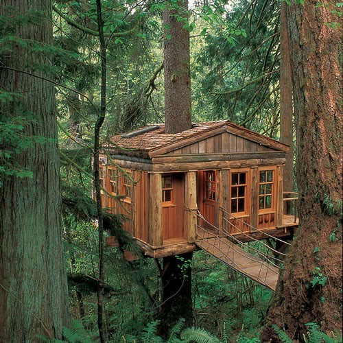 Forest treehouse trees washington - 6276092928