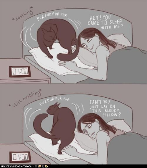 annoying beds Cats comic comics illustrations late pillows sleep sleeping - 6276101888