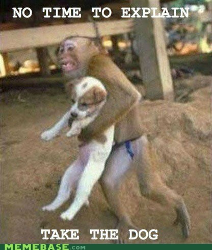 dogs Memes monkey no time to explain - 6276280064