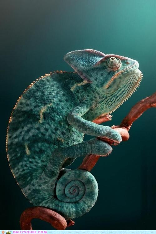 branch chameleon lizard looking up optimists