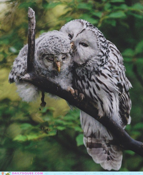 bird branch Grandpa gray old Owl whispering - 6276382976
