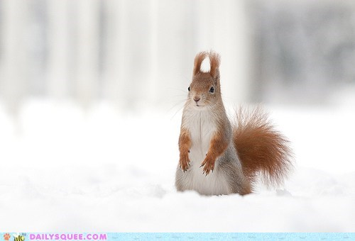 ears floofy lookout snow squee squirrels - 6276392960