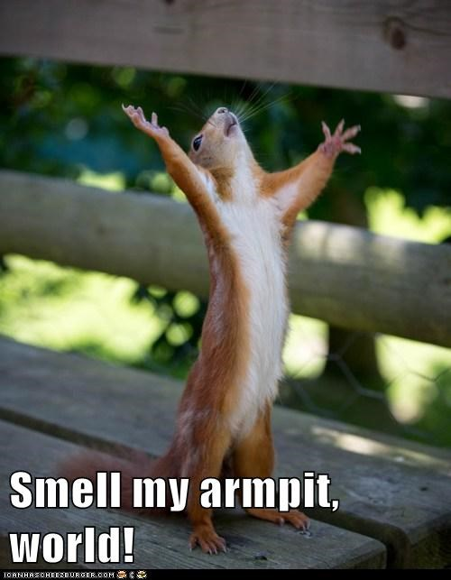 angry armpit armpits best of the week captions Hall of Fame hands up insult smell squirrel squirrels world - 6276442624