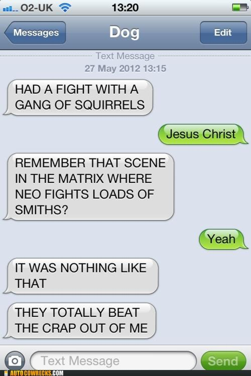 squirrels,texts from dog,the matrix