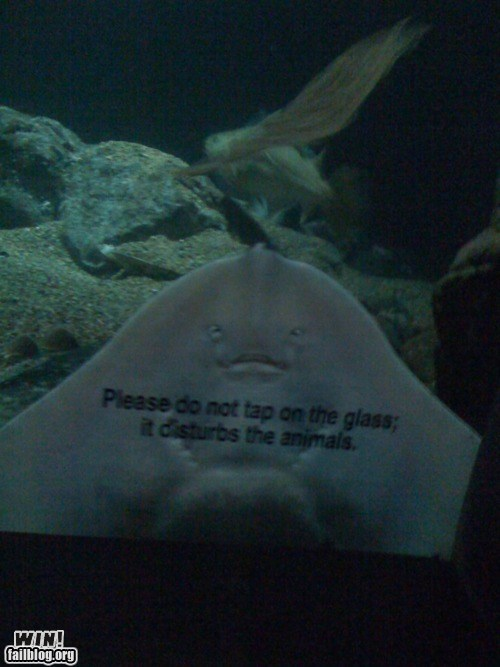 aquarium glass sting ray zoo - 6276674560
