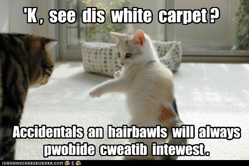 carpet,creativity,decorator,feng shui,flow,hairball,interior decorator,pee