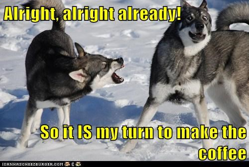 angry,barking,bickering,coffee,dogs,fighting,huskies,snow,turns,wolves