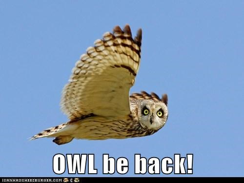 birds flying Hall of Fame ill-be-back Owl owls puns quotes sky terminator - 6277147648