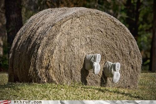 bale farm farmer hay hay bale - 6277307648