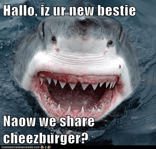 Cheezburger Image 6277330944
