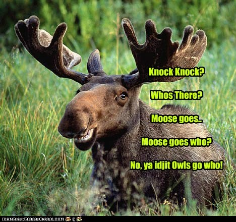 field,knock knock,moose,owls,smiling