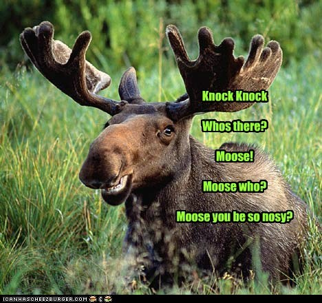 Knock Knock Whos there? Moose! Moose who? Moose you be so nosy?