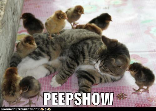 chick,chickens,chicks,peep,peepshow,pile,pun