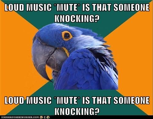 birds,knocking,loud,Memes,Music,paranoid,Paranoid Parrot