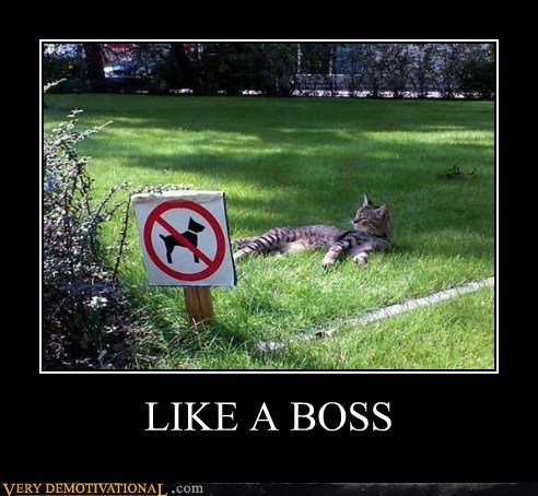 cat dogs hilarious Like a Boss - 6277880576