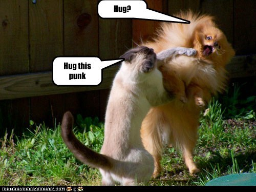 Cats comfort dogs fight hug hugs lolcats no punk reject violence