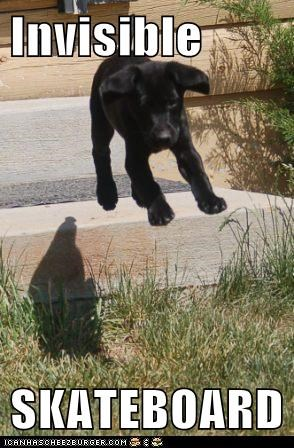 dogs invisible lab puppy skateboard