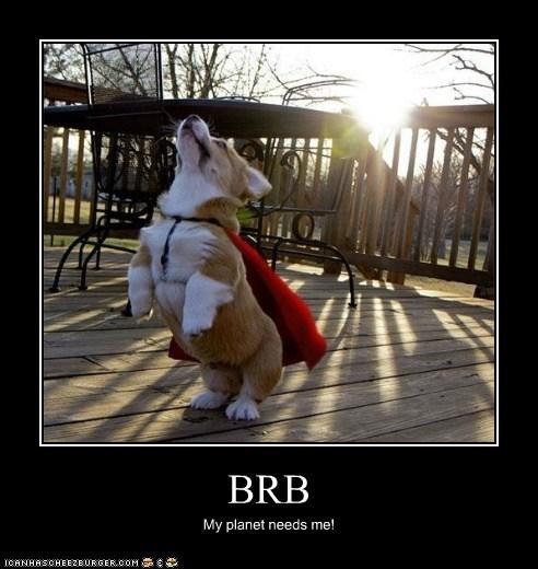 brb cape corgi flying super hero - 6279017472