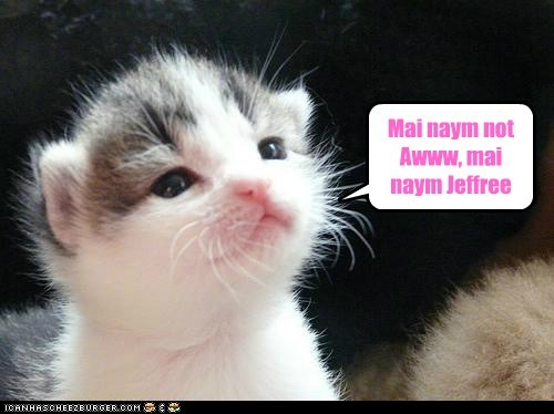 aww jeffrey captions cute Cats name