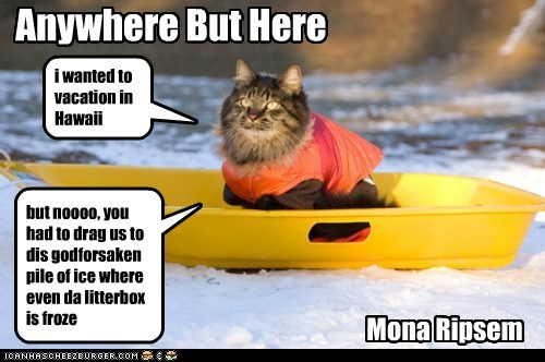 Anywhere But Here Mona Ripsem i wanted to vacation in Hawaii but noooo, you had to drag us to dis godforsaken pile of ice where even da litterbox is froze