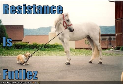 corgi,dogs,herding dog,horse,resistance is futile
