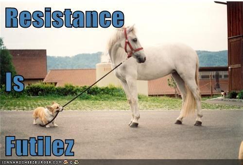 corgi herding dog horse resistance is futile - 6279284736
