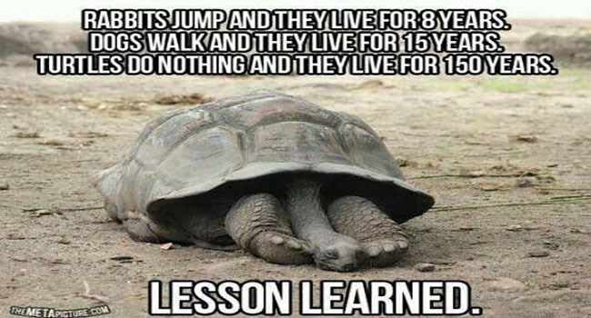 funny meme about learning to be lazy from turtles