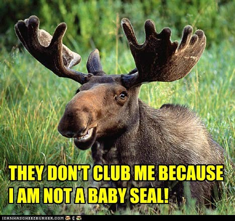 THEY DON'T CLUB ME BECAUSE I AM NOT A BABY SEAL!