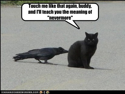 attack,basement cat,bird,crow,hurt,kill,nevermore,raven
