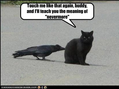 attack basement cat bird crow hurt kill - 6279538944
