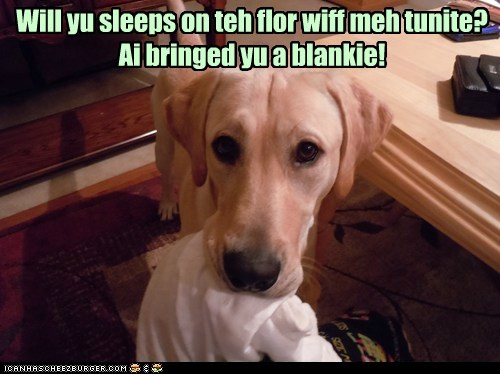 blankies dogs floor sleep with you what breed - 6279558400