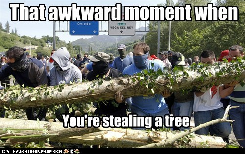 That awkward moment when You're stealing a tree