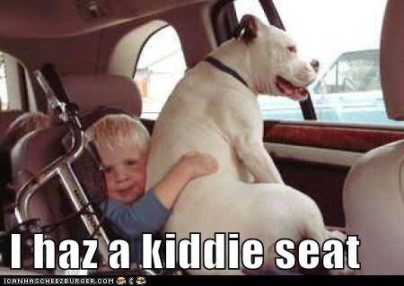 car seat dogs kid kiddie seat sit sitting what breed - 6279688960