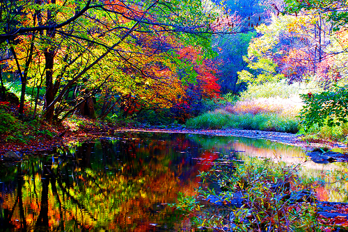 autumn China Forest lake trees - 6279732992