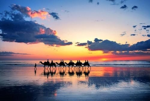 beach,camels,ocean,sunset