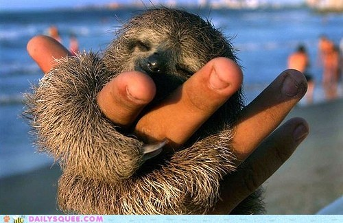 claws furry Hall of Fame hand hugs love sloth squee