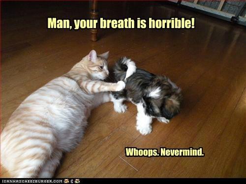 breath butt cat gross shih tzu smell stink - 6279868160