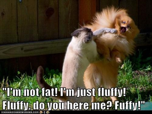 captions cat Cats dogs fight fighting Fluffy Interspecies Love not fat pomeranian - 6280272384