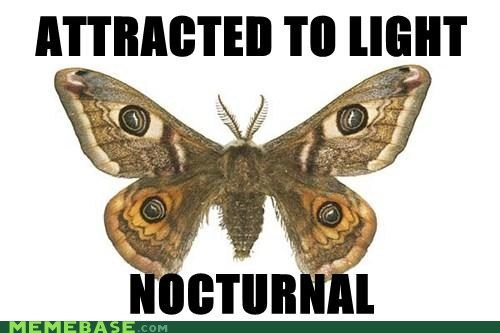 attracted,light,Memes,moth,nocturnal