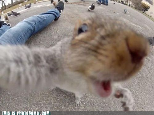animal,Animal Bomb,cute,dawww,selfshot,squirrel