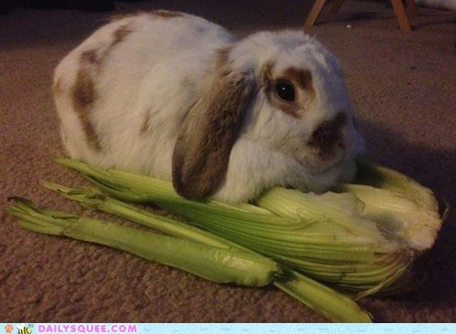 bed bunny doin it wrong food happy bunday pet rabbit reader squee - 6280354816