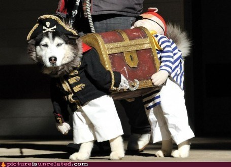 best of week costume pet pirates wtf