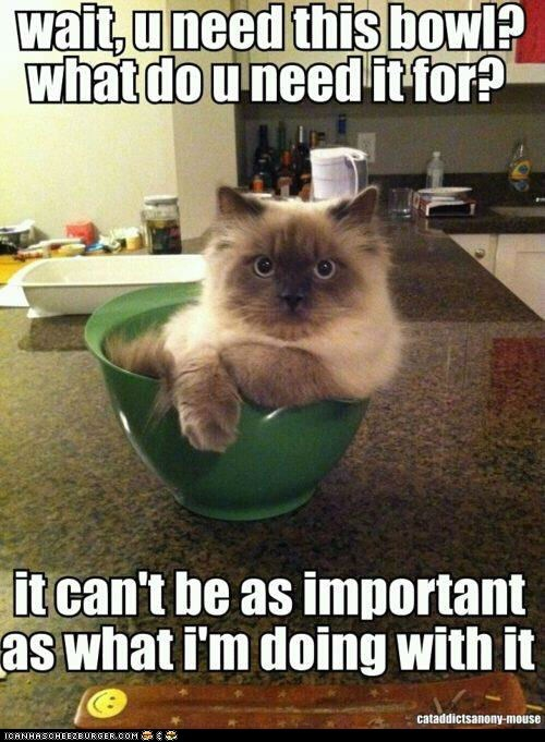 annoying bowls Cats in the way lolcats move sitting - 6280595968