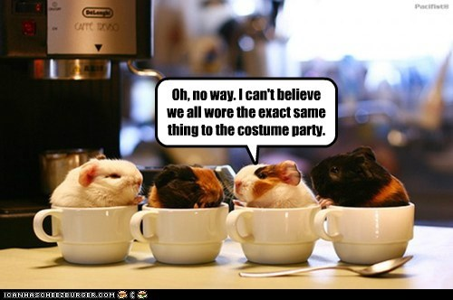 coffee cups,costume party,counter top,espresso machine,guinea pigs,spoon
