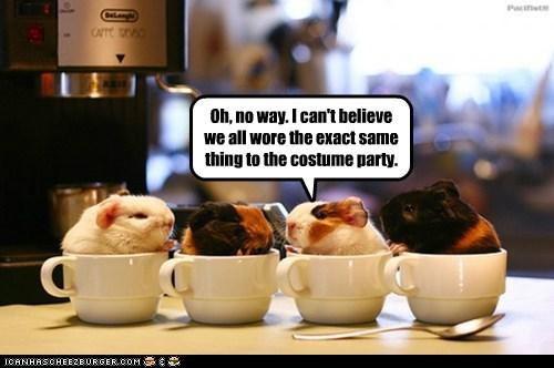 coffee cups costume party counter top espresso machine guinea pigs spoon - 6280926464