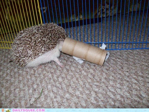 hedgehog hide and seek pet reader squee toilet paper roll - 6280942080