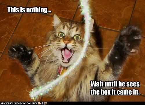 box,excite,play,string,yay