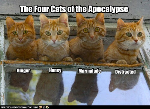 The Four Cats of the Apocalypse Ginger Marmalade Honey Distracted